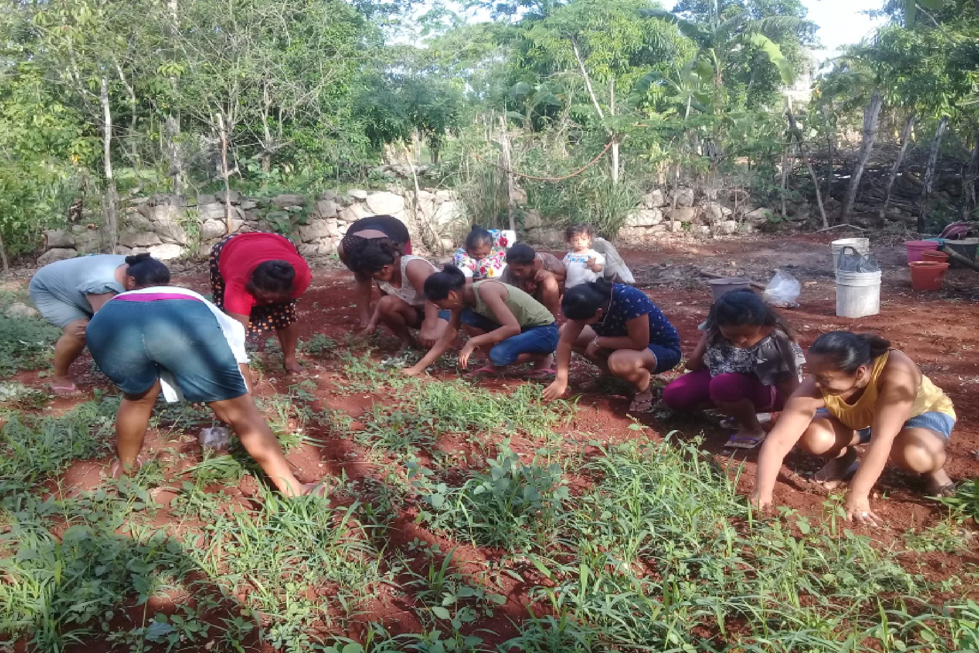 Escuelas de campo: estrategia para fortalecer la seguridad alimentaria